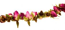Rose Garland: Plain